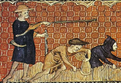 Medieval peasants harvesting wheat